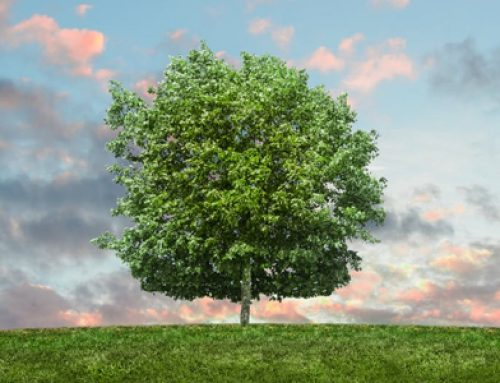 10 tips til en miljøvenlig virksomhed