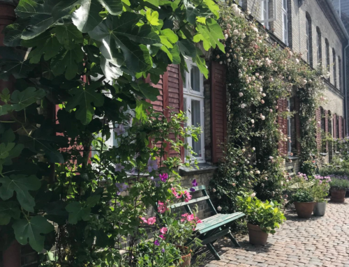 Studierapport 2019: From Nature In The City To NatureCity